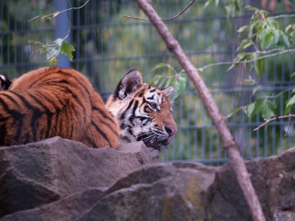 Hoyerwerda, Zoo