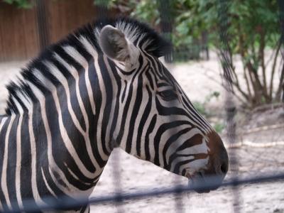 Hoyerswerda, Zoo